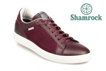 Shamrock 10.62 bordo