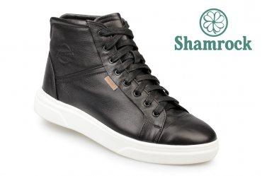 Shamrock 20.41