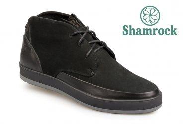 Shamrock 20.7